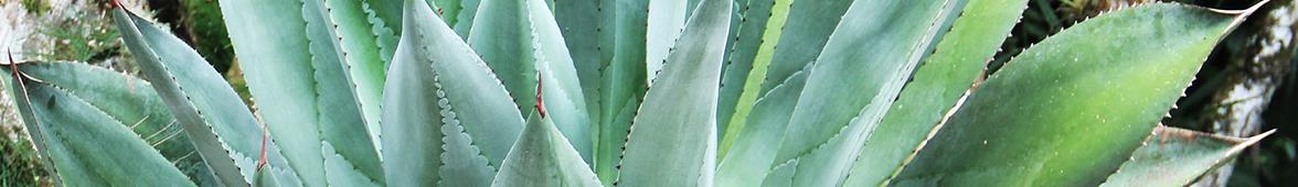 Kühles, sauberes und erfrischendes Wasser ist mit intensiver, beruhigender Aloe versetzt.