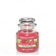 Yankee Candle Pink Dragon Fruit 104 g