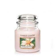 Yankee Candle Champaca Blossom 411 g